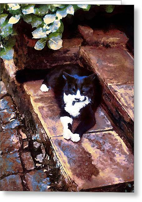 Black And White Cat Resting Regally Greeting Card
