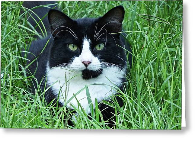 Black And White Cat With Green Eyes Greeting Card