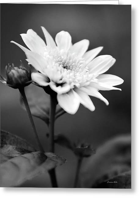 Black And White Coreopsis Flower Greeting Card