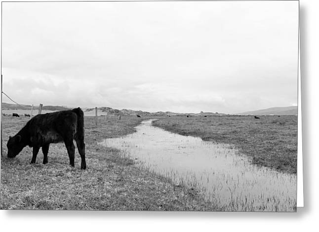 Black And White Cows Greeting Card