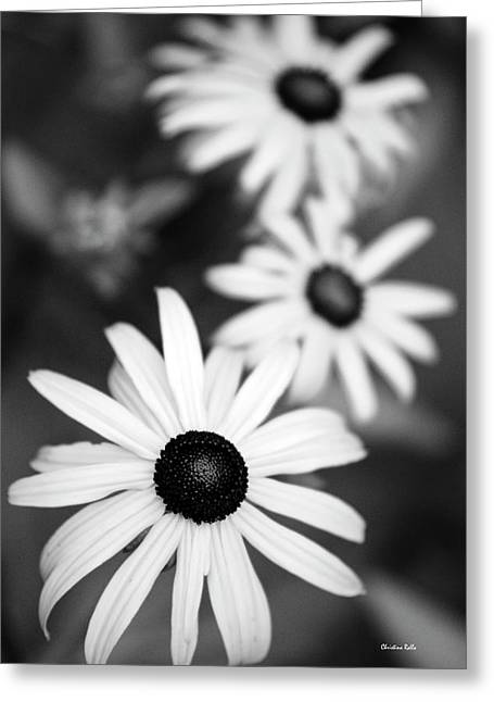Greeting Card featuring the photograph Black And White Daisies by Christina Rollo