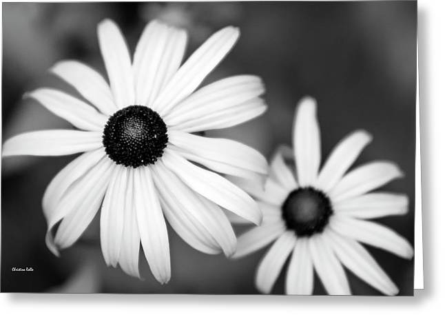 Greeting Card featuring the photograph Black And White Daisy by Christina Rollo