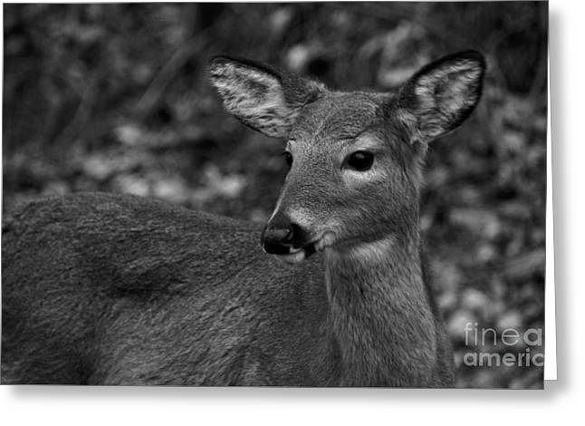 Black And White Deer Heart Art Greeting Card by Robyn King