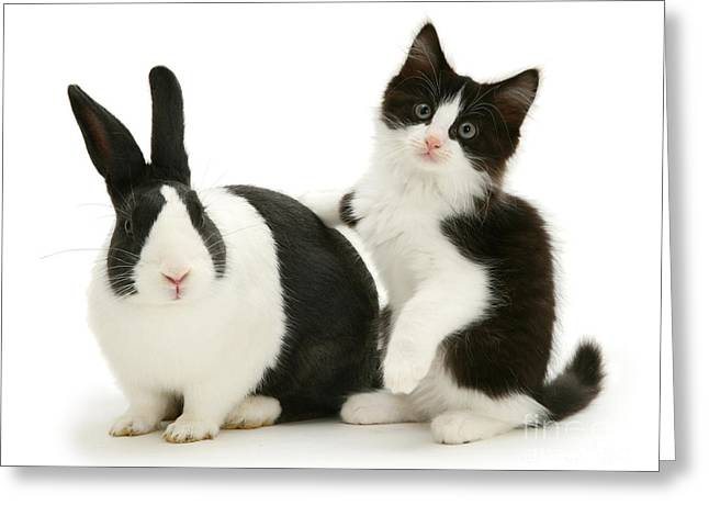 Black And White Double Act Greeting Card