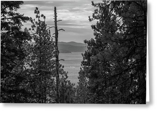 Black And White Evergreens Greeting Card by Michael Osborne