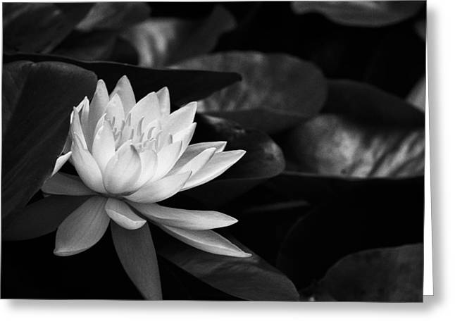 Black And White Flower Nine Greeting Card