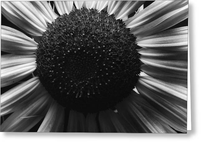 Black And White Flower Twelve Greeting Card