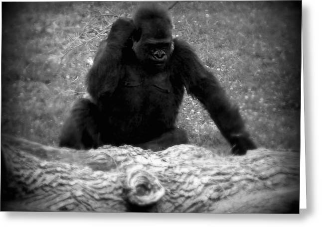 Black And White Gorilla Greeting Card