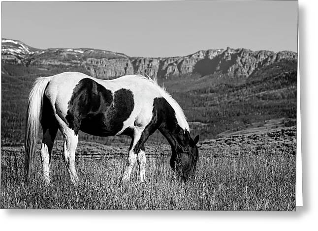 Black And White Horse Grazing In Wyoming In Black And White  Greeting Card