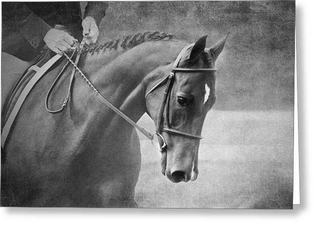 Black And White Horse Photography - Softly Greeting Card by Michelle Wrighton