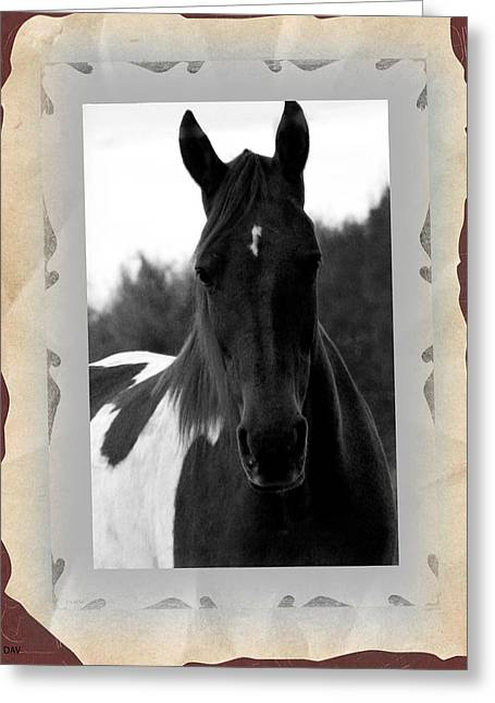 Black And White Horse Portrait Greeting Card by Debra     Vatalaro