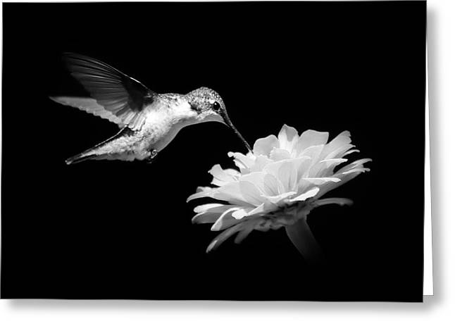 Greeting Card featuring the photograph Black And White Hummingbird And Flower by Christina Rollo