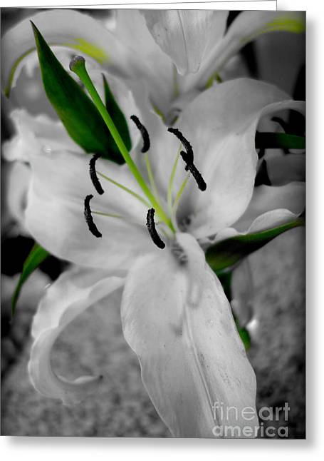 Black And White Life Greeting Card by Kip Krause