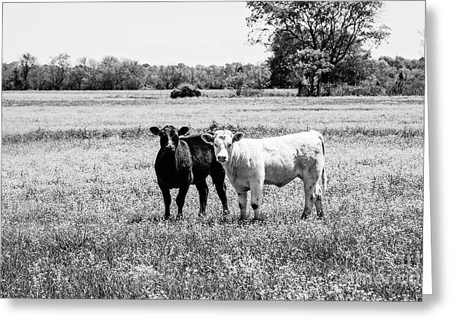 Black And White Love Greeting Card