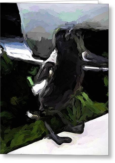 Black And White Magpie On The Porch Greeting Card