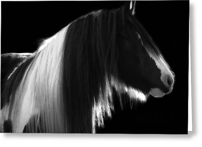 Black And White Mare Greeting Card by Terry Kirkland Cook