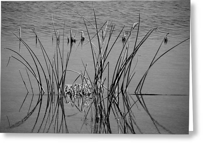 Black And White Marsh Design Greeting Card by Rosalie Scanlon