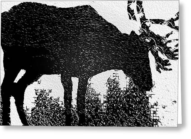 Black And White Moose Greeting Card