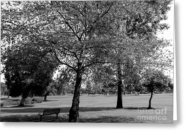 Black And White Nature Greeting Card
