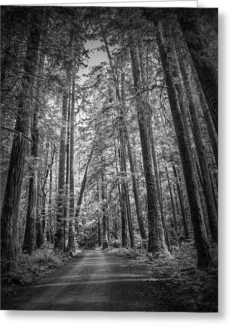 Black And White Of A Road In A Vancouver Island Rain Forest Greeting Card