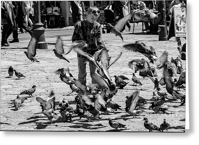Black And White Of Boy Feeding Pigeons In Sarajevo, Bosnia And Herzegovina  Greeting Card