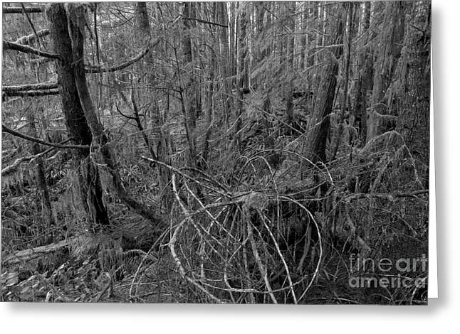 Black And White Pacific Rim Rainforest Greeting Card by Adam Jewell