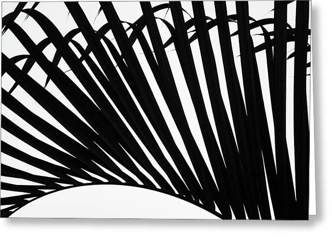 Black And White Palm Branch Greeting Card