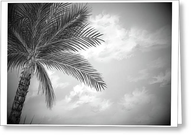 Greeting Card featuring the digital art Black And White Palm by Darren Cannell