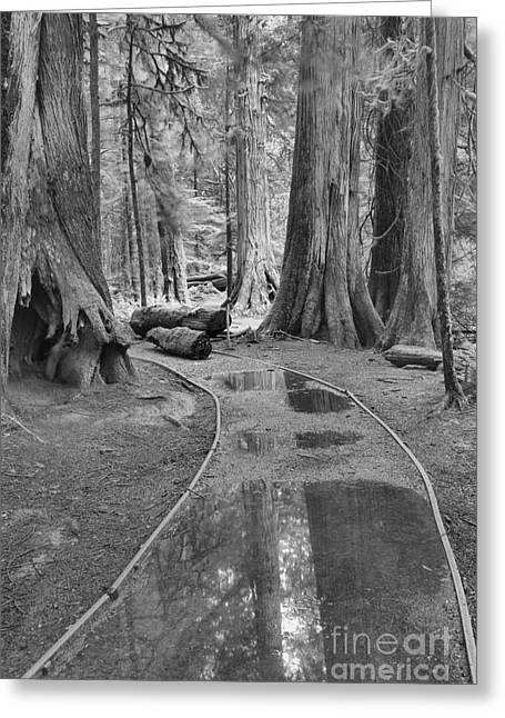 Black And White Path Through The Forest Greeting Card by Adam Jewell