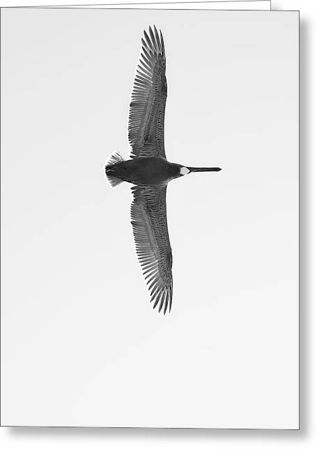 Black And White Pelican Greeting Card