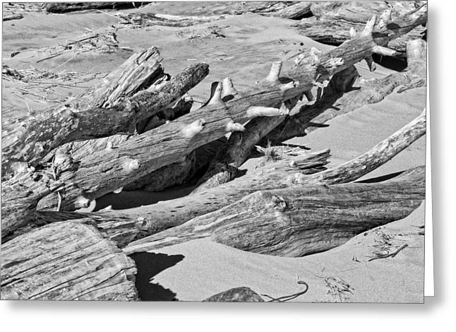 Black And White Photo Of Driftwood And Sand On Popham Beach On The Coast Of  Greeting Card by Keith Webber Jr