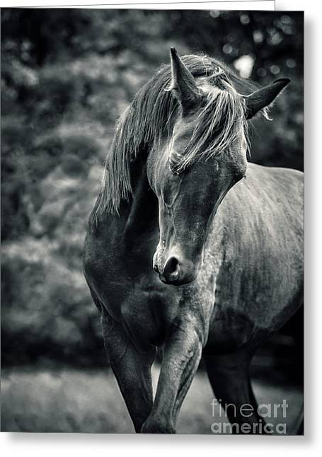 Black And White Portrait Of Horse Greeting Card