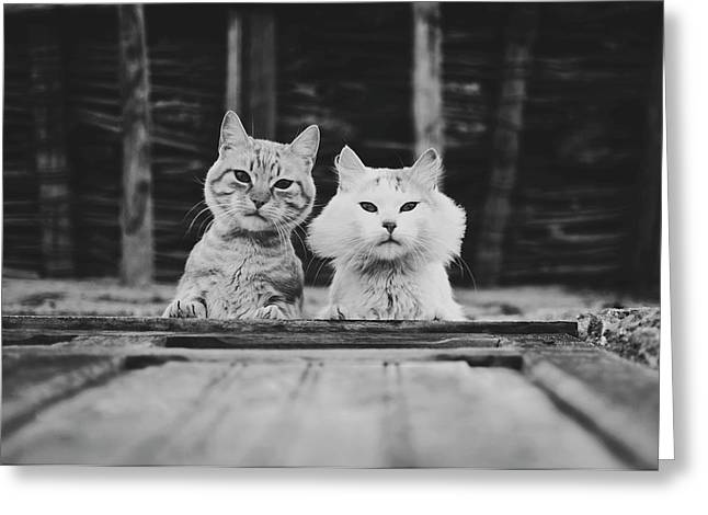 Black And White Portrait Of Two Aadorable And Curious Cats Looking Down Through The Window Greeting Card
