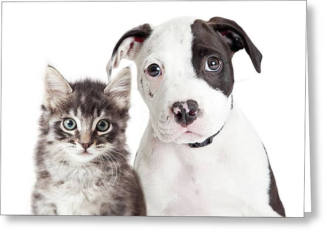 Black And White Puppy And Kitten Greeting Card by Susan Schmitz