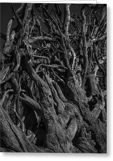 Black And White Roots Greeting Card by Garry Gay