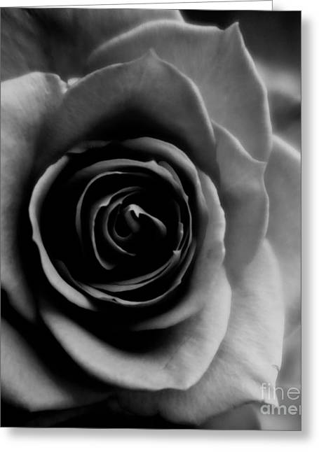 Sensual roses greeting cards page 14 of 20 fine art america black and white rose abstract greeting card m4hsunfo