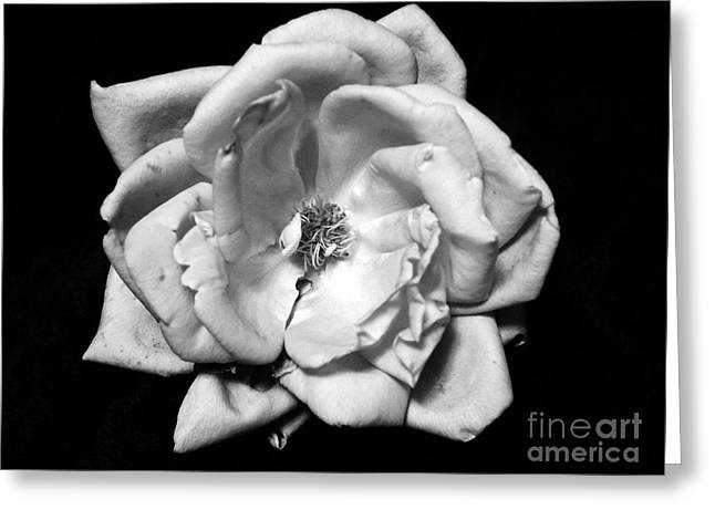Black And White Rose Greeting Card