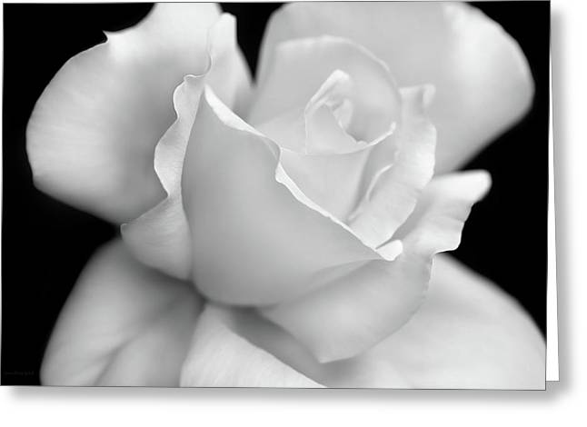 Greeting Card featuring the photograph Black And White Rose Flower by Jennie Marie Schell