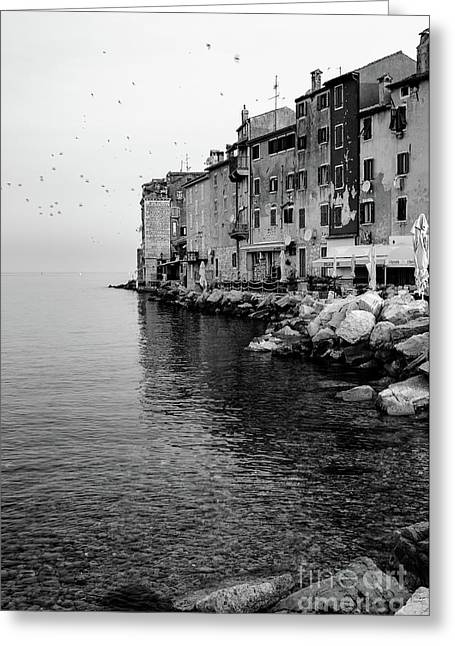 Black And White - Rovinj Venetian Buildings And Adriatic Sea, Istria, Croatia Greeting Card