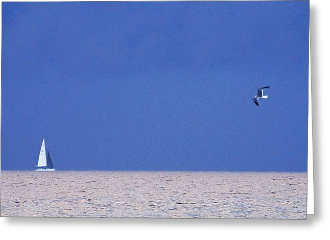 Black And White Sailboat And Seagull Greeting Card