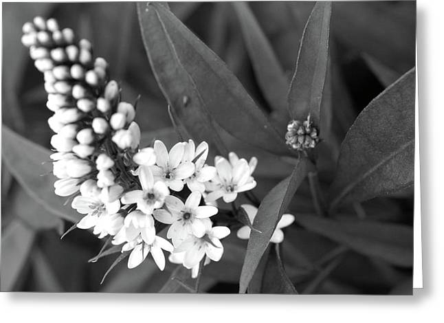 Black And White Strife Greeting Card by David Bearden