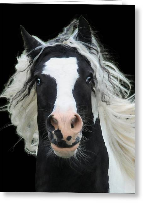 Gypsy Greeting Cards - Black and White Study VI Greeting Card by Terry Kirkland Cook