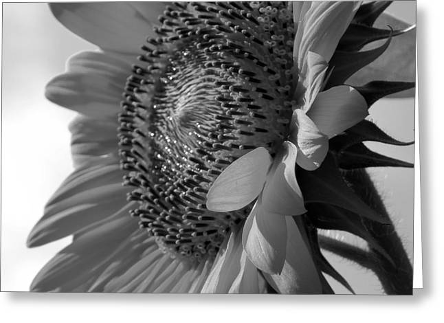 Black And White Top Of The Morning Greeting Card by Christine Belt