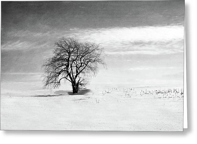 Black And White Tree In Winter Greeting Card