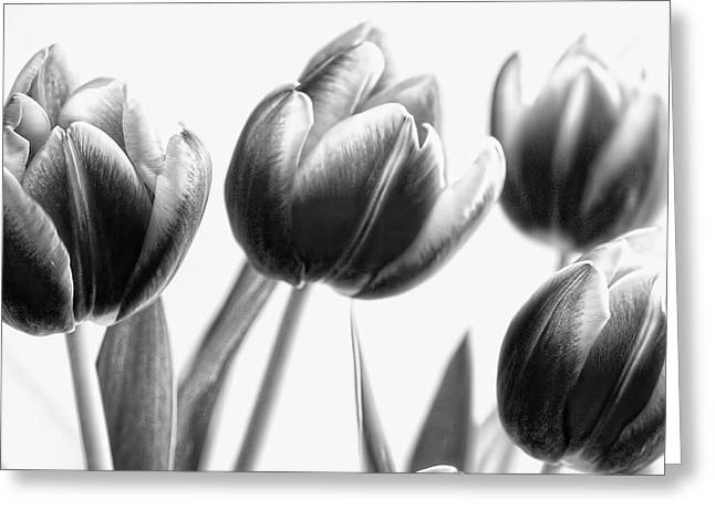 Black And White Tulips Greeting Card