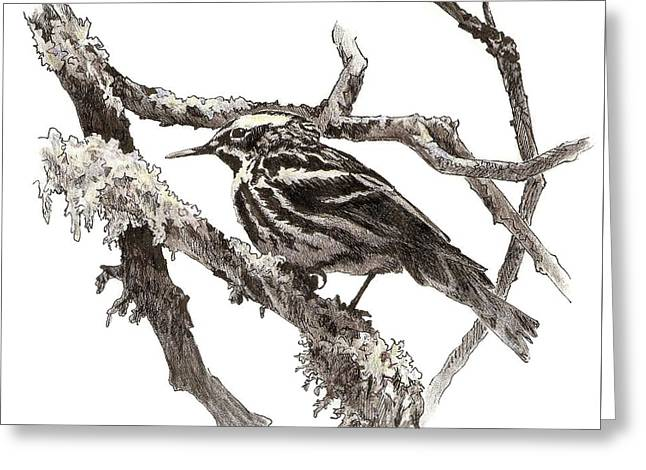 Black-and-white Warbler Greeting Card