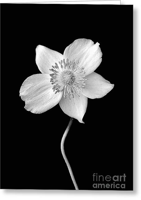 Black And White Wildflower Greeting Card