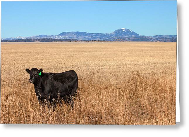 Black Angus Looking Greeting Card by Todd Klassy