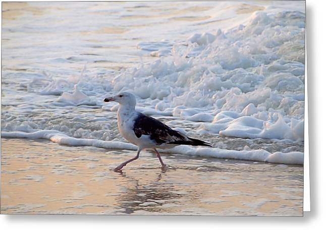 Black-backed Gull Greeting Card