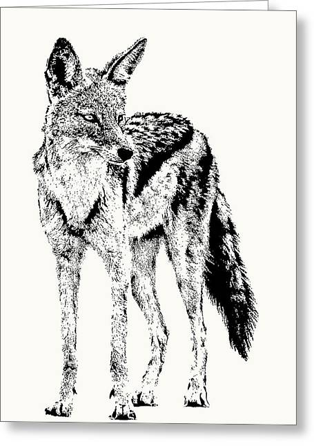 Black-backed Jackal Full Figure Greeting Card
